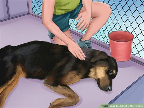 best ways to rottweilers 4 ways to adopt a rottweiler wikihow