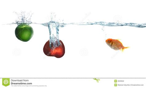 vegetables z wave wave and fruit and fish stock photography image 3503502