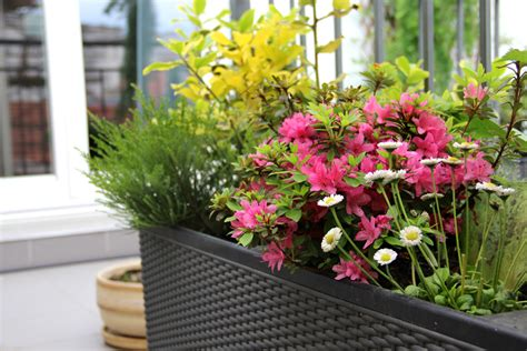 gardening trends 2017 gardening trends of 2017 country landscape supply
