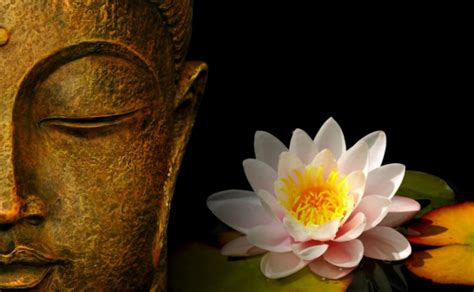 buddha lotus light reiki amazes