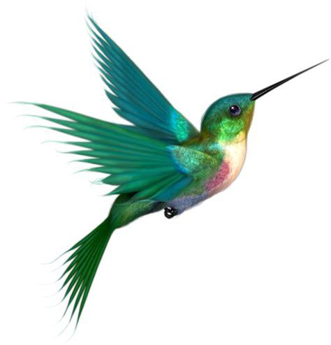 hummingbird drawings clipart best