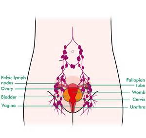 pelvic area pictures about pelvic radiotherapy information and support