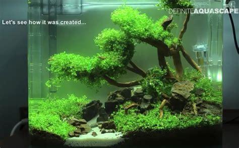 Moss Bahan Aquascape contoh gambar aquascape dan jenis tanaman alam ikan