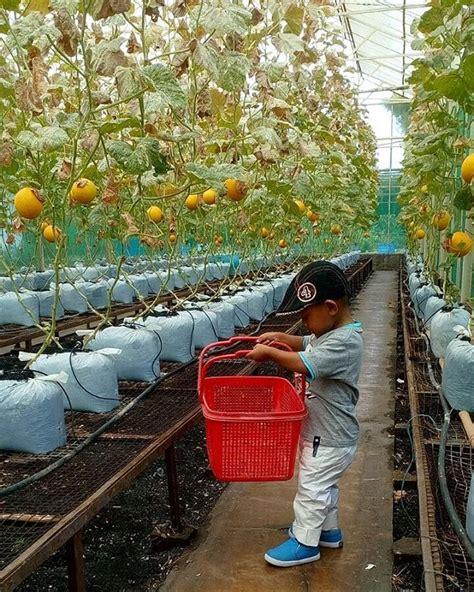 Mekar Sari Minuman Sari Buah wisata buah di taman mekarsari angkutkoper
