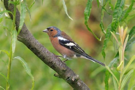 Deterring Birds From Patio keeping birds away thriftyfun