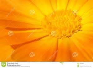 Beautiful Orange Beautiful Orange Flower Royalty Free Stock Photography