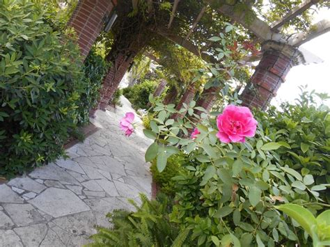 florist winter garden fl pin by iluv winter park on i central park