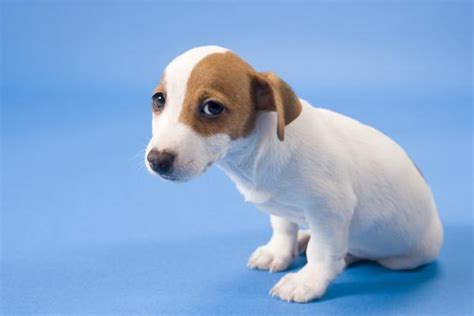 early symptoms of parvo in puppies 8 most common health problems symptoms and potential treatments pets grooming
