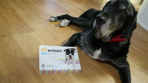 puppy dna test embark dna test review and coupon code that mutt