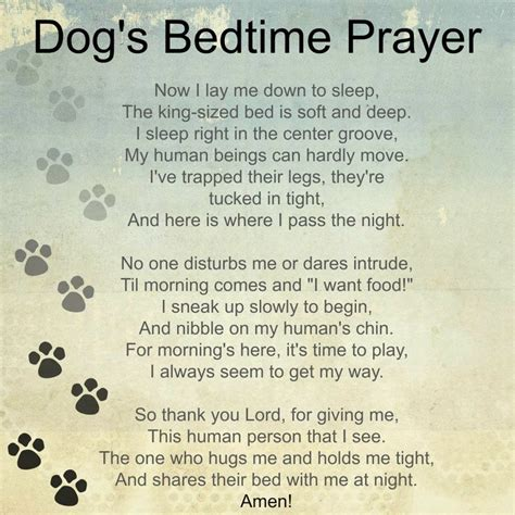 dogs prayer pin by farrand on boy the basset hound