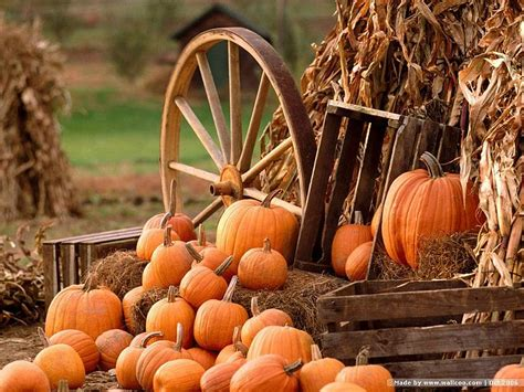 pumpkin display wallpaper horse wagon with pumpkins and
