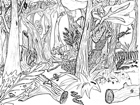 coloring pages rainforest free printable nature coloring pages for best