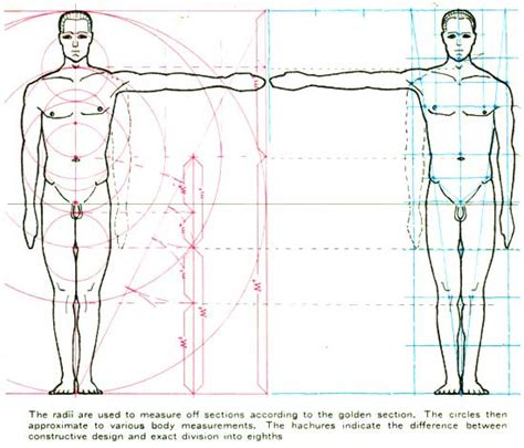 design effect sle size proportion human body proportions