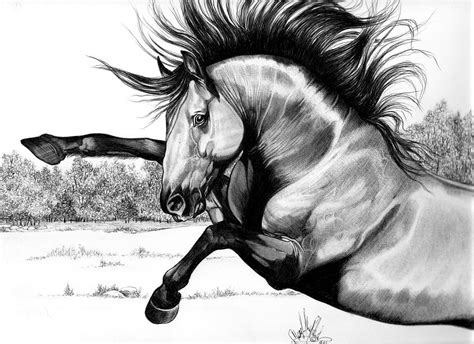 mustang horse drawing wild kiger mustang stallion drawing by cheryl poland