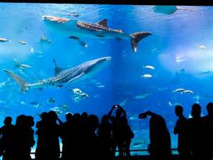 glass bottom boat naha okinawa whale glass bottom boats best information for your