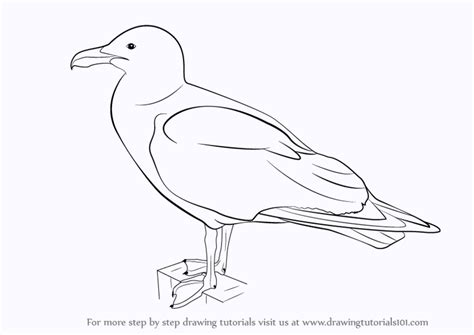 how to draw sea birds learn how to draw a gull seabirds step by step drawing