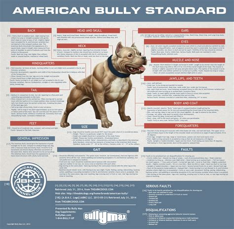 american bully puppy weight chart the american bully standards terminology of structure