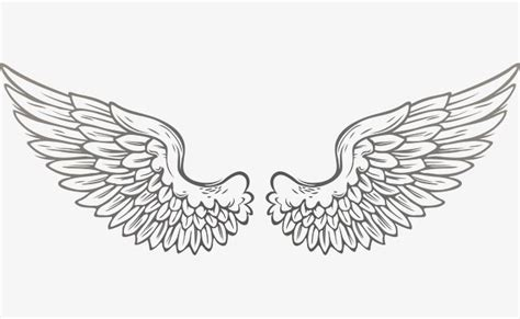 vector wings vector fly wing png  vector