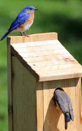 elaborate bird house plans elaborate bird house plans best of free bird house plans bluebird purple martin wren