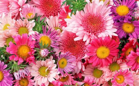imagenes de varias flores nomes de flores de a a z conhe 231 a seus significados tudo ela