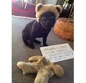 The 19 Most Popular Dog Shaming Shenanigans In Past