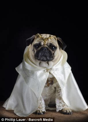 lord of the pugs owner dresses his pet pugs in hilarious costumes from tolkien s lord of the rings