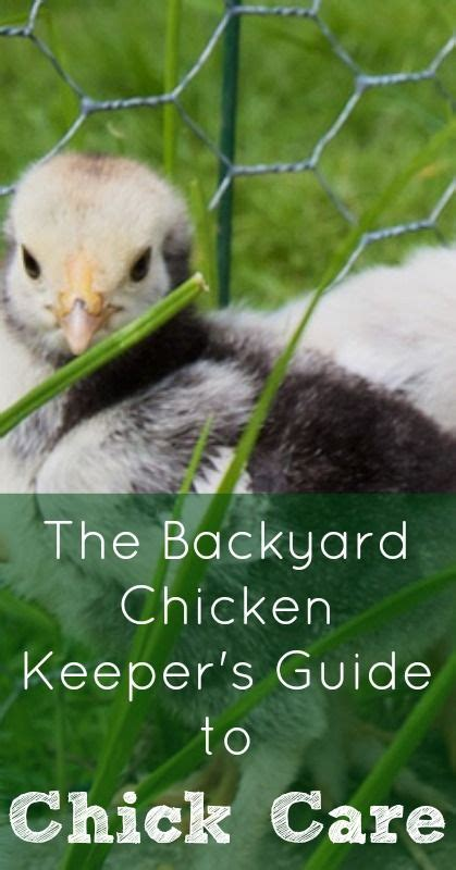 how to take care of backyard chickens 616 best backyard poultry images on pinterest