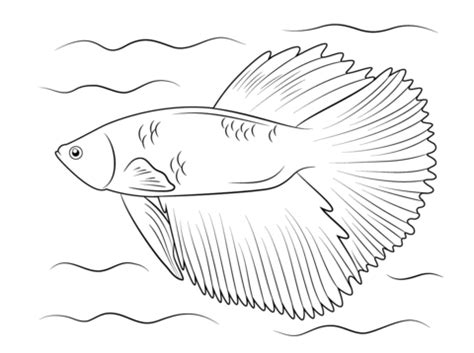 tropical fish coloring page regarding betta fish coloring