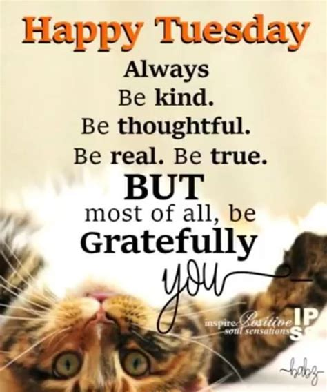 happy tuesday  gratefully  pictures