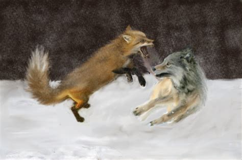 wolf vs the fox vs the wolf one by rko509 on deviantart