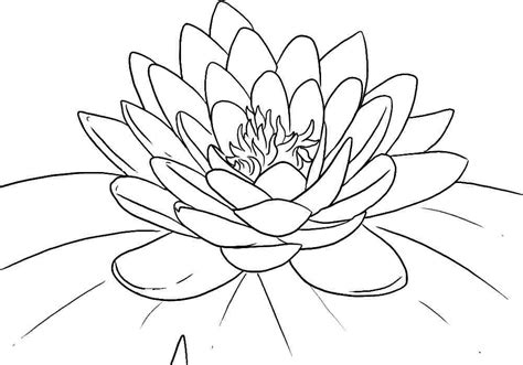 coloring pages of flowers for s day lotus flower coloring pages coloring home