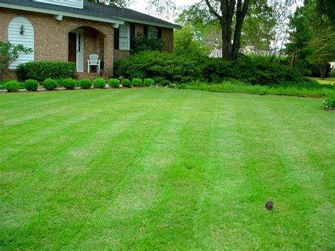 7 easy winter lawn care tips for raleigh nc homeowners lawnstarter