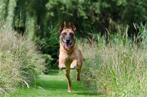 obedience for dogs obedience for dogs basic tips