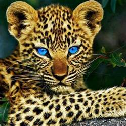 Baby Jaguar Baby Jaguar Shout Out To My Nsa Bebbiezzz Adorable