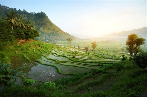 bali travel guide  tips     surprise
