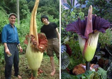 imagenes lindas raras ranking de las flores y plantas m 225 s raras del mundo
