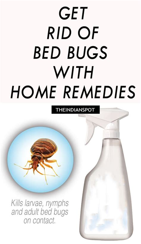 home remedy to get rid of bed bugs 1000 ideas about bed bug remedies on pinterest bed bugs