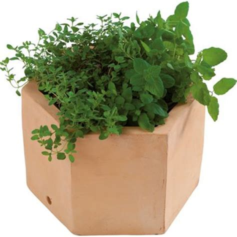 Herb Planters Homebase by 10 Of The Best Herb Planters