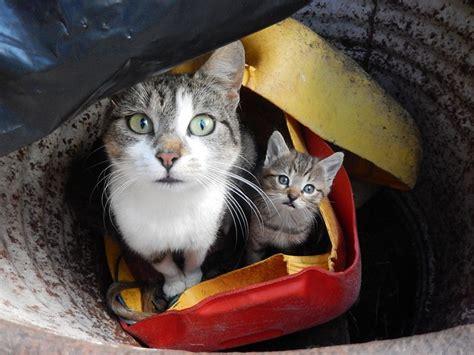 ab wann haben katzen fieber ab wann spielen katzen