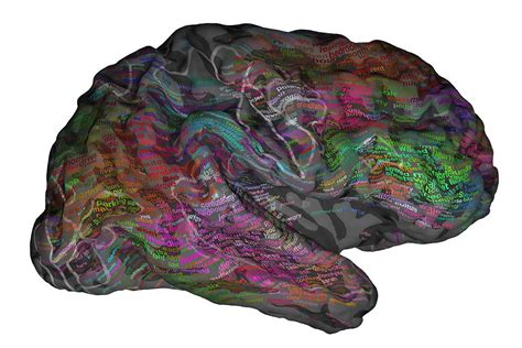 turpiloquio a letto le parolacce nel cervello anatomia turpiloquio