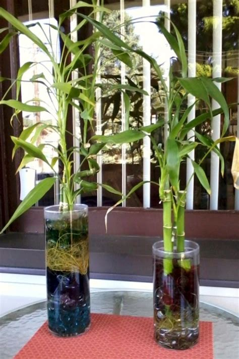 205 best images about bamboo plants indoor on pinterest
