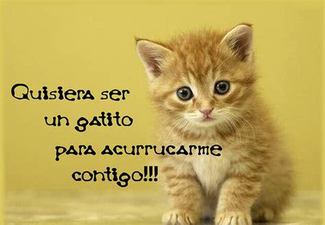 imagenes de gatos tristes con mensajes imagenes de gatitos con frases de amorim 225 genes para descargar