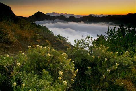 membuat puisi gunung 7 tempat menakjubkan untuk melihat kecantikan bunga