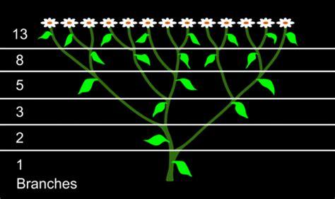 pattern of numbers in nature phi quantities and fibonacci numbers cosmometry