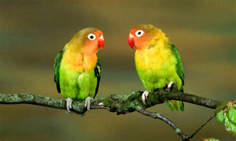 free download images of love birds amazing wallpapers 40 free spectacular bird wallpapers naldz graphics