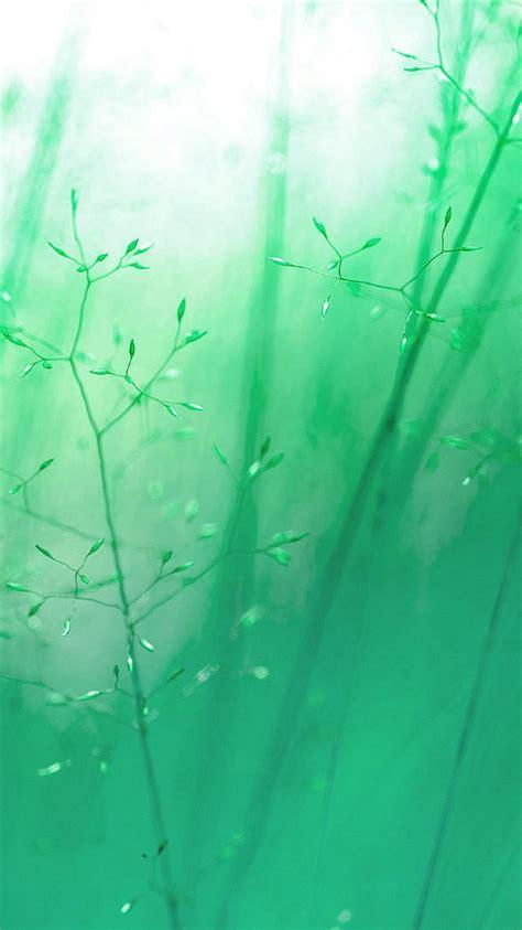 beautiful nature iphone wallpapers