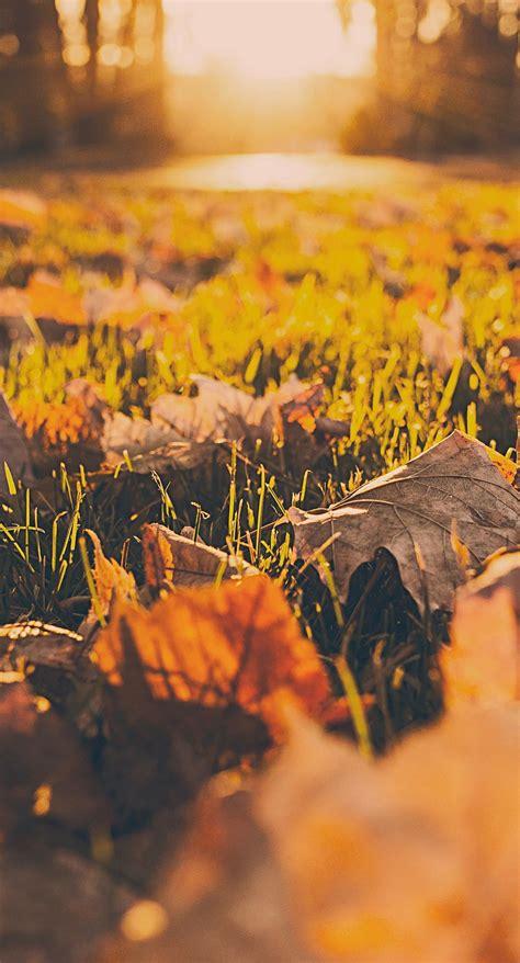 wallpaper iphone 6 autumn landscape dead leaves fall blur wallpaper sc iphone6splus