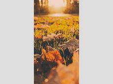 Landscape dead leaves fall blur | wallpaper.sc iPhone6sPlus Iphone 5c Green Wallpaper