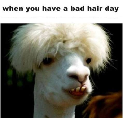 Bad Hair Day Helpers On The Way by Bad Hair Day Pictures Quotes Memes Images