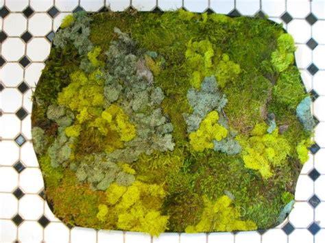 Live Moss Shower Mat by 17 Best Ideas About Moss Bath Mats On Green